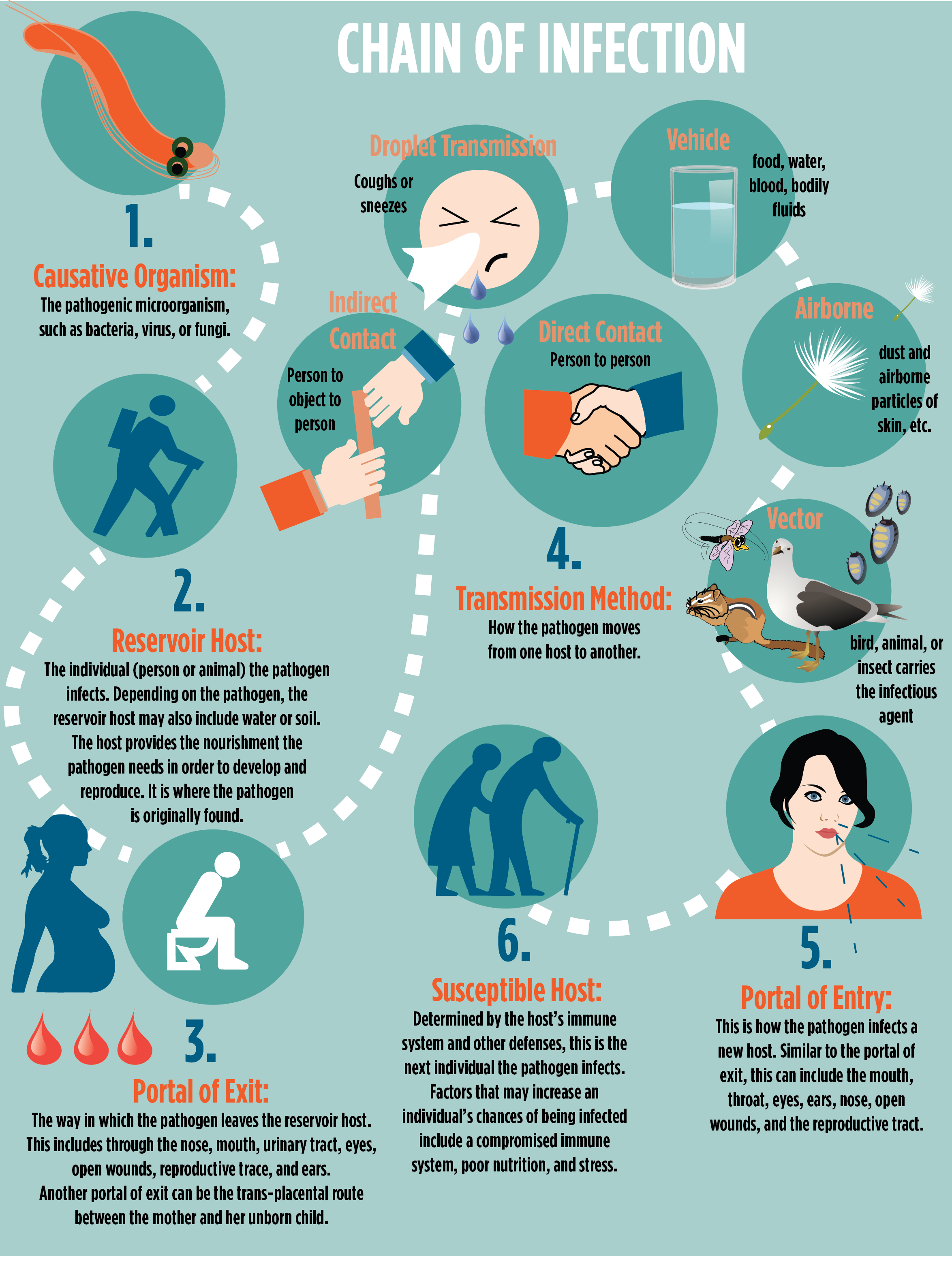 Chain Of Infection Infographic