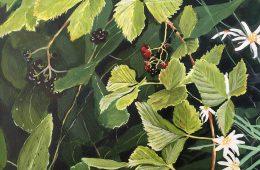 Summer Berries in Northern Ontario