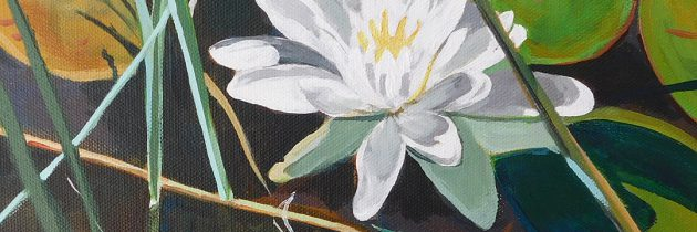 Waterlilly Season