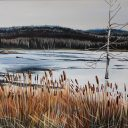 Cattails and Beaver Dams